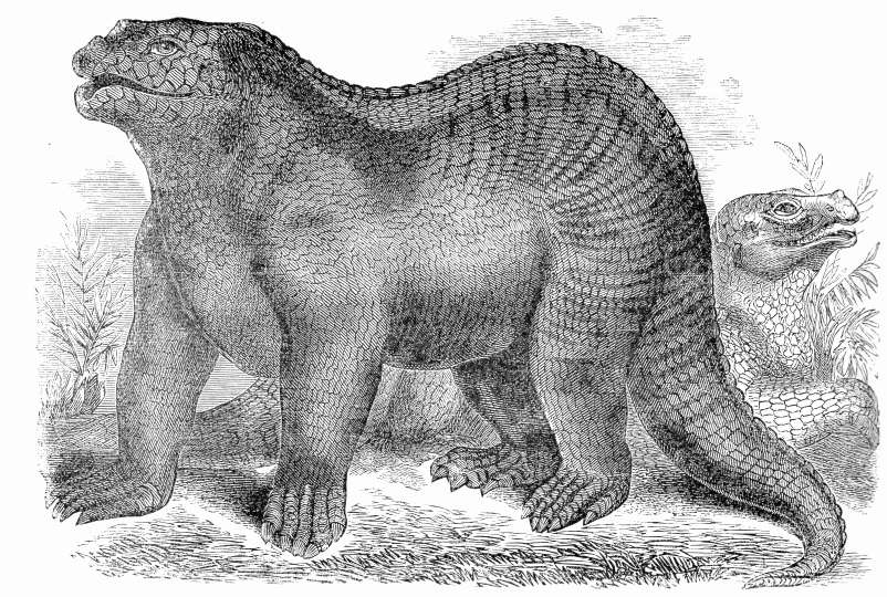 Early depiction of Iguanodon
